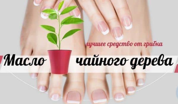 Масло чайного дерева от грибка ногтей на ногах